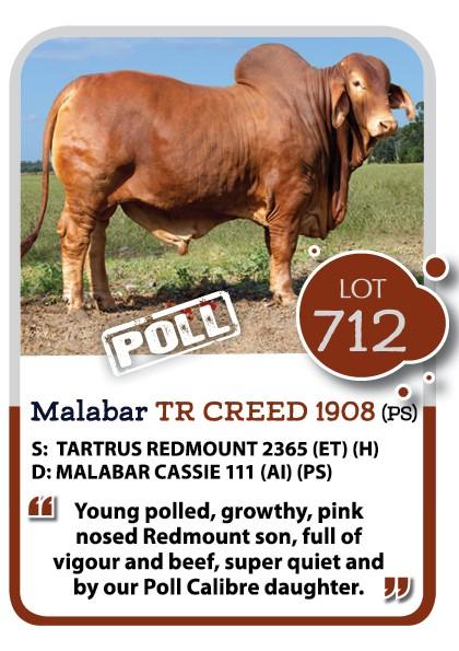 Malabar Red Brahman Bull for Sale